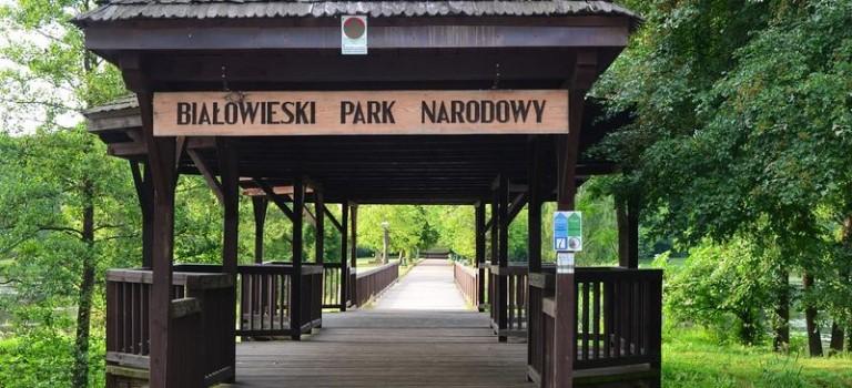 Der Bialowieza Nationalpark