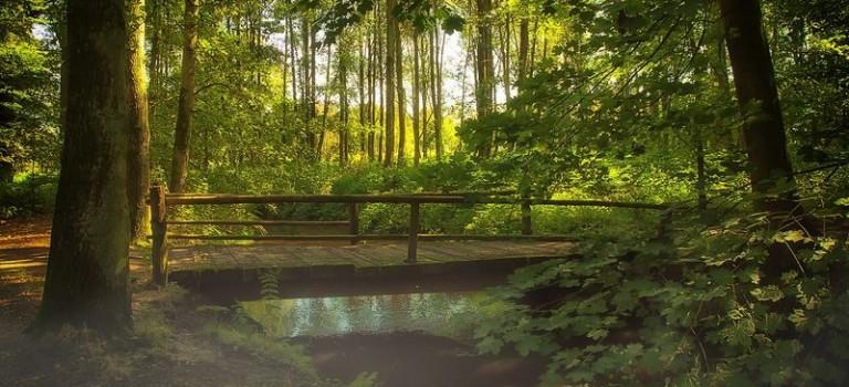 Der Bory Tucholskie Nationalpark