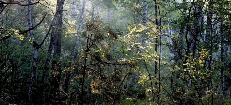 Der Gorczanski Nationalpark