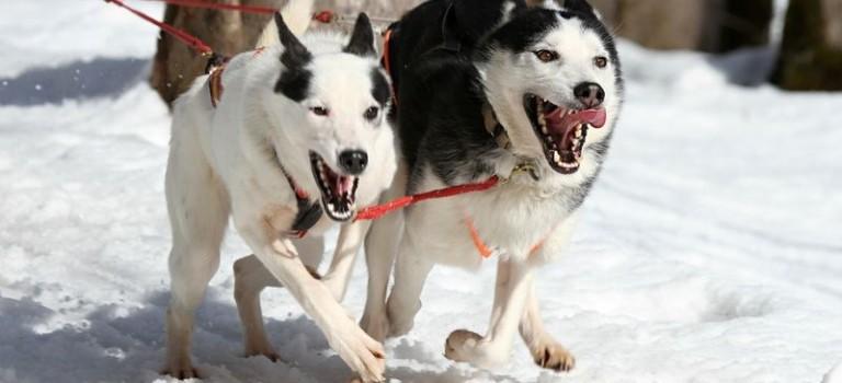 Hundesport in Polen