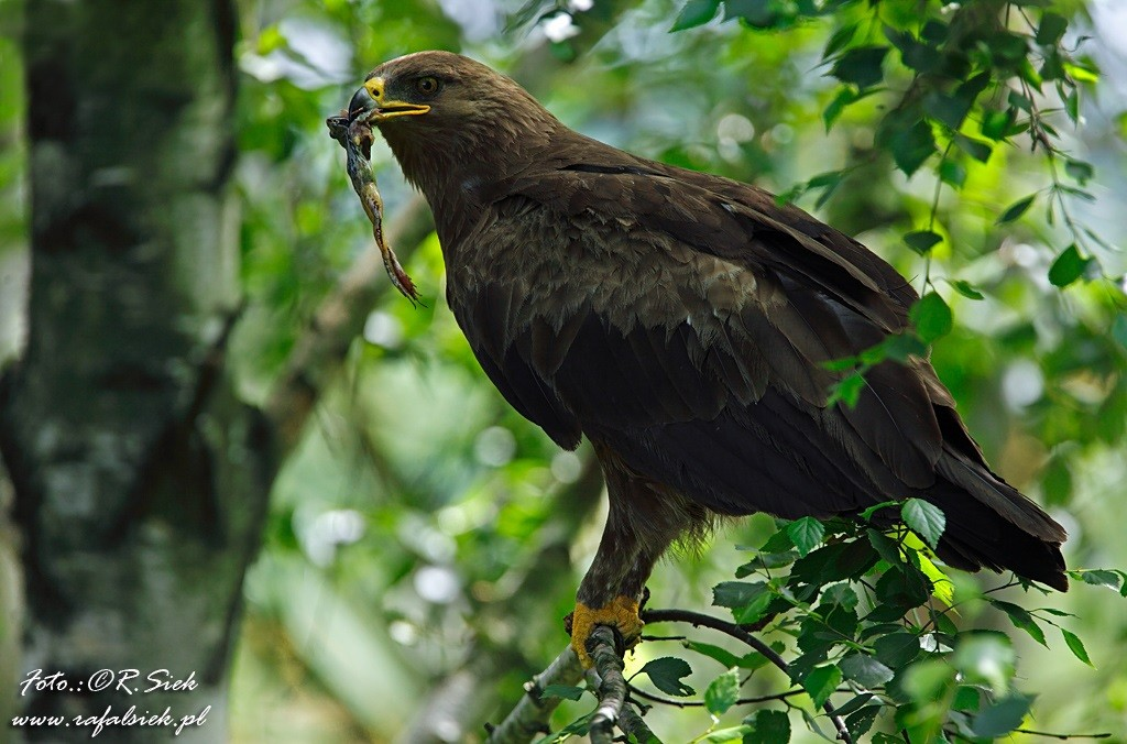 Seltene Vögel im Nationalpark Polesie